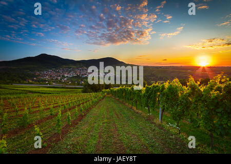 Vineyard with colorful sunrise in Pfalz, Germany - Stock Photo