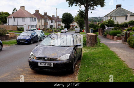 Brighton, UK. 6th June, 2017. A car damaged by a fallen tree in Wilmington Way Brighton during the overnight storms - Stock Photo
