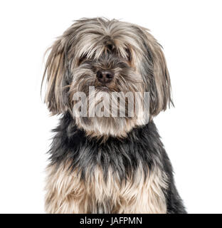 Close-up of a yorkshire Terrier, isolated on white - Stock Photo