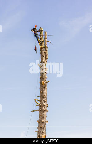 Arborist  working with a chainsaw in the top of a tree trunk, aginst blue sky. Jagerspris, Denmark - May 25, 2017 - Stock Photo