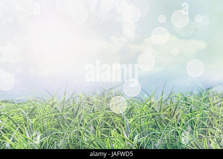 Abstract grass background on a beautiful summer day with lens flare and bokeh. - Stock Photo