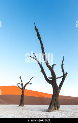 Dead trees at sunset in Deadvlei, part of the Namib Naukluft Park in Namibia - Stock Photo