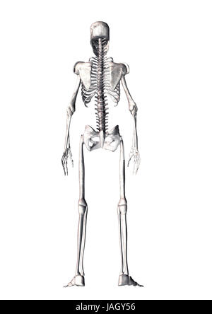 skeleton from behind stock photo, royalty free image: 56773058 - alamy, Skeleton