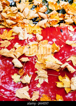 Fallen autumn leaves on red car hood - Stock Photo
