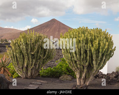 View with cacti from the House-Museum of Cesar Manrique in Tahiche on island of Lanzarote, Spain - Stock Photo
