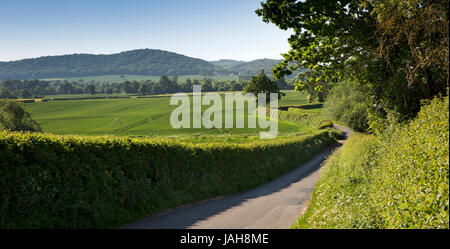 UK, England, Shropshire, Wrockwardine, Ercall Hill from small country lane, panoramic - Stock Photo