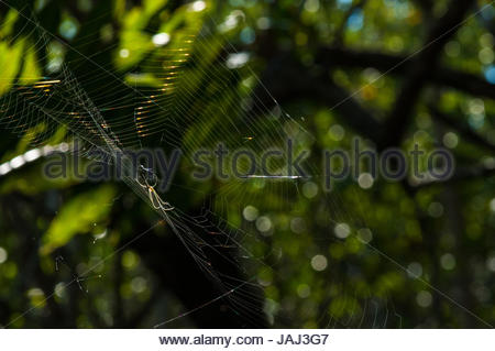 Close-up of spider on web. - Stock Photo