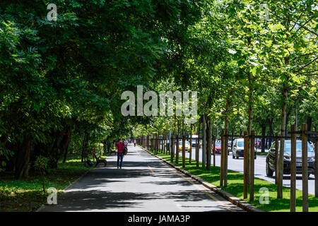 BUCHAREST, ROMANIA - MAY 24, 2017: Kiseleff Road is a major boulevard in Bucharest that runs as a northward continuation - Stock Photo