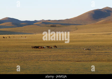 Mongolia,Central Asia,Ovorkhangai province,scenery,horses,bleeds, - Stock Photo
