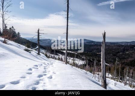late winter Beskid Slaski mountains bellow Barania Gora hill near Wisla resort in Poland with snow, steps, few trees, - Stock Photo