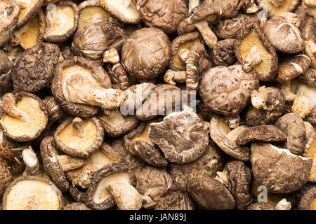 Dried shiitake - Stock Photo