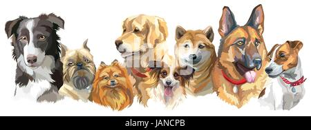 Set of colorful vector portraits of different dog breeds (brussels griffon, Shiba Inu, Pomeranian, Border collie, - Stock Photo