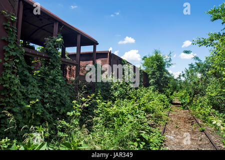 Old railway wagons on the railway track in the weeds, bushes and grass. - Stock Photo