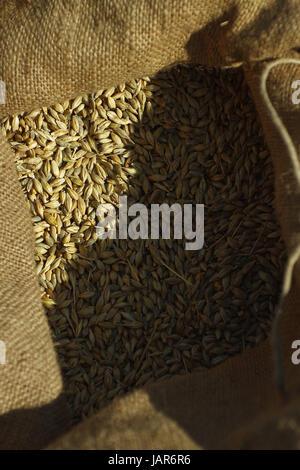Getreidekörner im Sack - Stock Photo