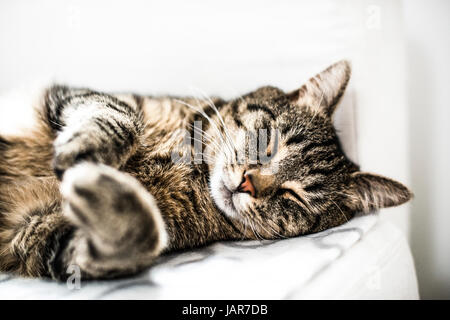 Domestic cat sleeping on a sofa at home. - Stock Photo