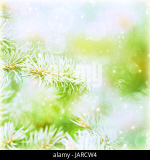 Green abstract natural background, coniferous branch covered with rime, frosty and snowy weather in winter season, - Stock Photo