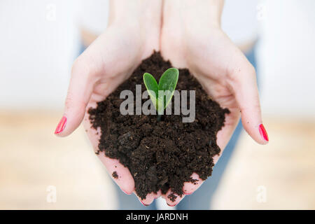 Woman's hands holding green small plant in soil. Growth concept. Nature concept - Stock Photo