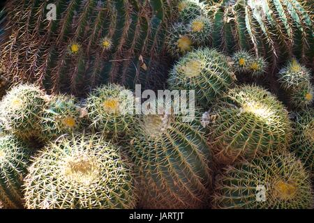 close up photos of plants and flowers - Stock Photo