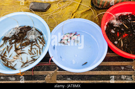 travel to China - live river fishes on street outdoor market in Yangshuo in spring - Stock Photo