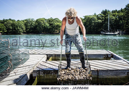 An oyster fisherman hauls a basket of oysters up from a holding pen in the river. - Stock Photo