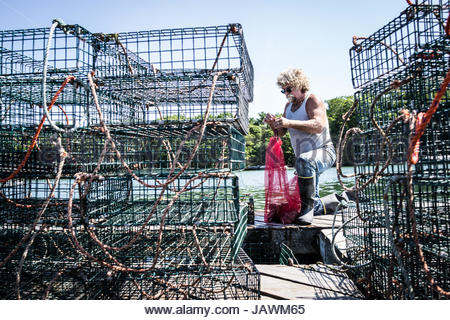 An oyster fisherman bags up oysters from a holding pen in the river. - Stock Photo