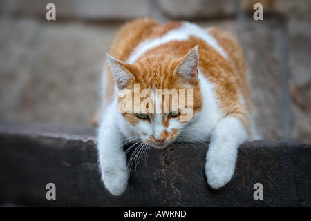 Katze - Stock Photo