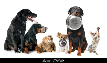 hungry pets in front of a white background - Stock Photo