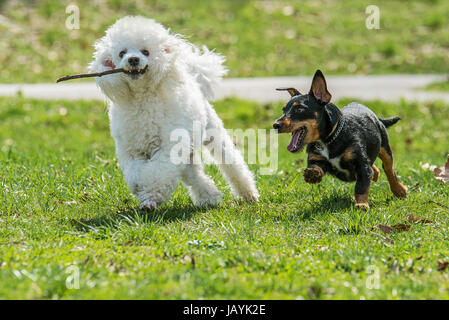 Beautiful two dogs in the park - Stock Photo