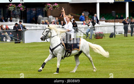 Ardingly Sussex, UK. 8th June, 2017. The Devil's Horsemen display team in action at the South of England Show held - Stock Photo