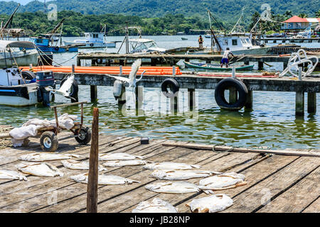 Livingston, Guatemala - August 31, 2016: Egrets fly over drying fish as fishermen work on boats in Caribbean town - Stock Photo
