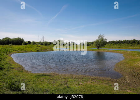 Lippe, renaturalised meadow landscape nearby the river estuary in the Rhine, Wesel, Lower Rhine, North Rhine-Westphalia, - Stock Photo