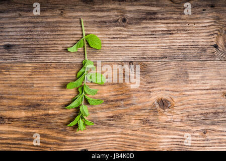 Freshly picked sprig of mint on wooden table - Stock Photo