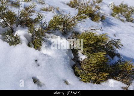 Snow in navacerrada madrid spain - Stock Photo