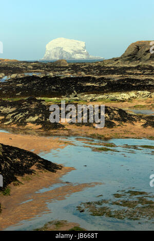 Bass Rock, taken from North Berwick, Scotland, UK - Stock Photo