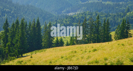 Pastures and meadows in summer mountains. - Stock Photo