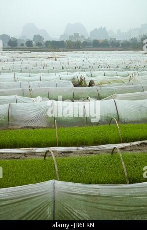 Rice nursery and limestone karst landscape, Van Lam, Ninh Hai, near Ninh Binh, Vietnam - Stock Photo