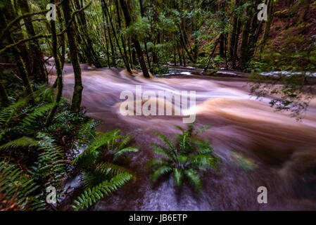 Flood at the river at Nelson Falls in Franklin-Gordon Wild Rivers National Park, Tasmania - Stock Photo