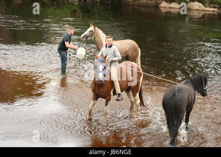 Appleby, Cumbria, UK. 9th June, 2017. Young Gypsies wash horses in the middle of the Arden river in Appleby. The - Stock Photo