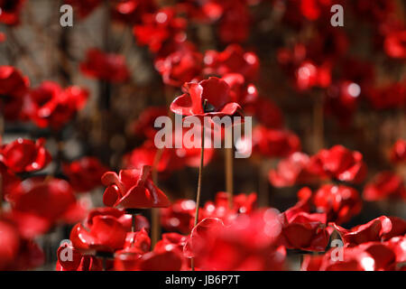London, UK. 9th Jun, 2017. First full public display of the Weeping Window poppy display at Derby Silk Mill Tower. The display is made up of several thousand of the ceramic flowers created by Derbyshire's Paul Cummins and formed part of the magnificent Blood Swept Lands and Seas of Red exhibition at the Tower of London in 2014. Derby, UK. 9th June 2017. Credit: Richard Holmes/Alamy Live News Stock Photo