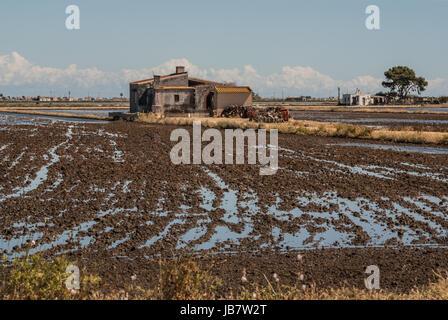 view of a paddy field in Delta de l'Ebre, Catalonia, Spain - Stock Photo