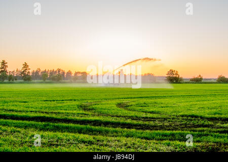 water pump at sunset in a big green field Europe - Stock Photo
