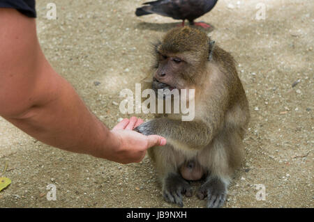 Monkey grabbing food out of my palm - Stock Photo