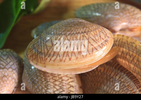 surf clam with basil leaves redy on wooden for cooking - Stock Photo