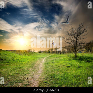 Country road and birds in the twilight of day - Stock Photo