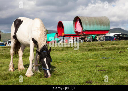 Appleby-in-Westmorland, U.K. 9th June 2017. Traditional bow top gypsy wagons  at the Appleby Horse Fair. The fair - Stock Photo