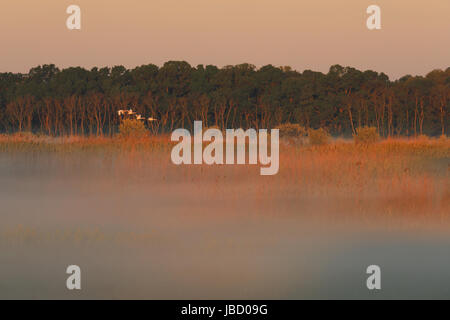 Sunrise in the Danube river delta in Romania. This area is declared UNESCO World Heritage site and Biosphere Reserve - Stock Photo