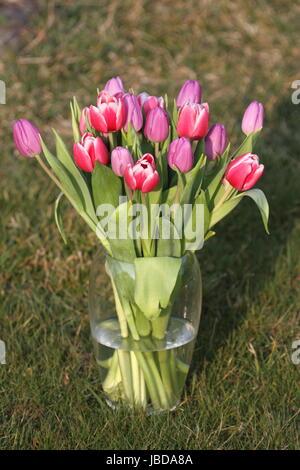 pink tulips in vase - Stock Photo