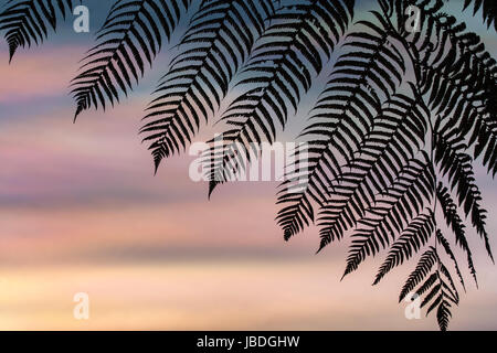 BALI, INDONESIA ASIA - Silhouette of a Fern leaf against a colourful iridescent sky or mother of pearl, at sunset. - Stock Photo