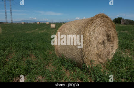 Round hay bales, outskirts of Rome. Power lines, mountains, more bales in background - Stock Photo