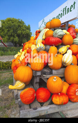 Many colorful ornamental pumpkins stacked on a wagon in front of blue sky - Stock Photo